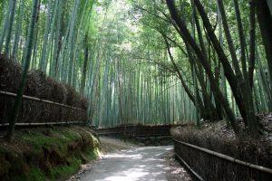 arashiyama tour giappone con guida